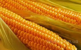Купим кукурузу, пшеницу, ячмень