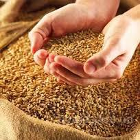 Постоянно закупаем кукурузу, сою, пшеницу