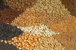 Продам пшеницу фуражную, 2 и 3 класс, ячмень, кукурузу