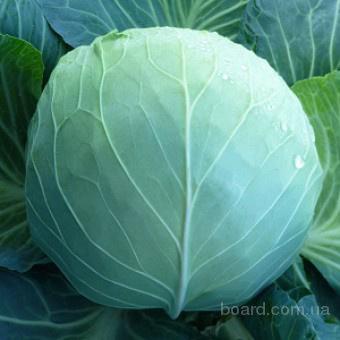 Семена белокочанной капусты KS 29 F1 (Китано)