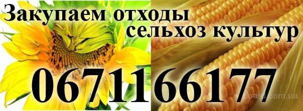 Куплю зерноотход и отход сельхоз культур!