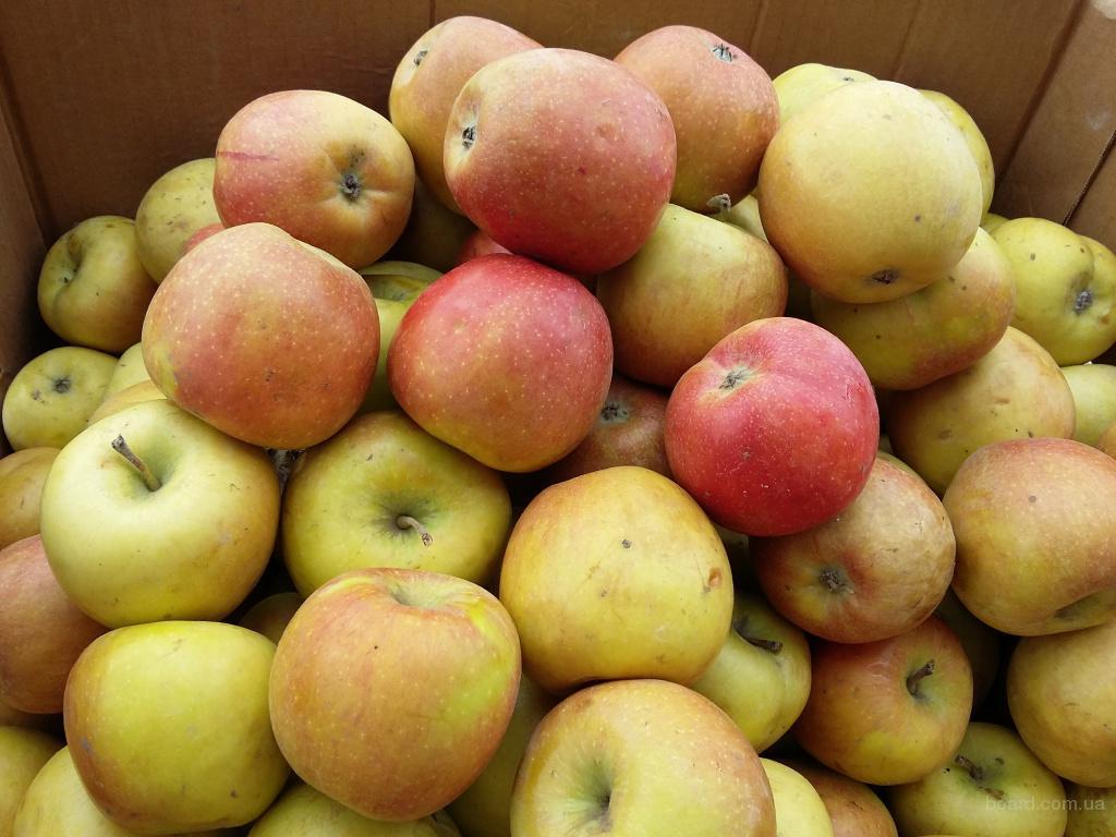 Продам яблоки хорошего качества.