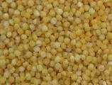 Продам просо 120 т с хозяйства в Днепропетровской области