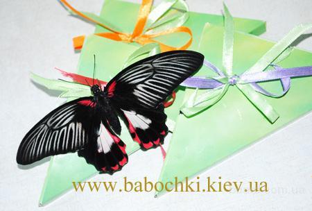 Живые бабочки для праздников, салютов, подарков круглый год!