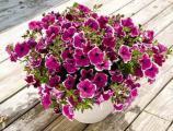 Предлагаем оптом цветы.