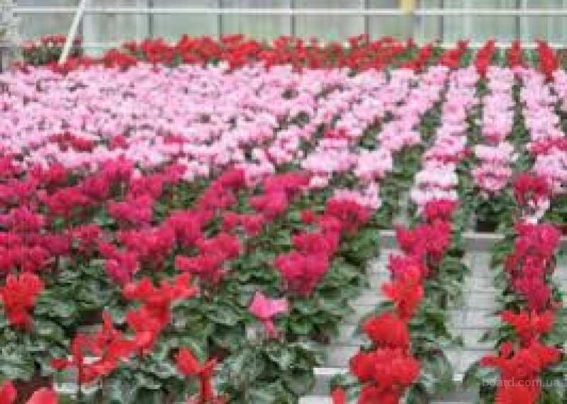 Куплю цветы оптом в запорожье