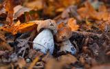 Семена белых грибов для посева на участках, в помещениях, в питомник