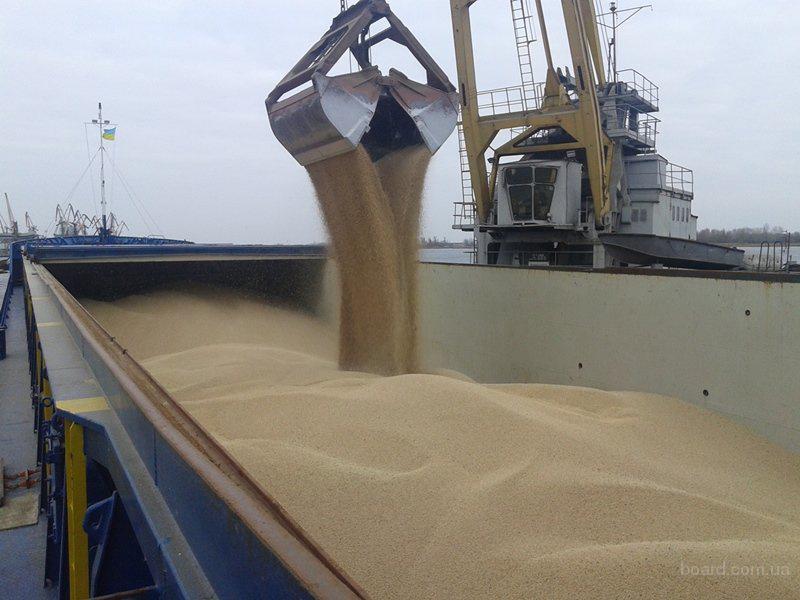 На постоянной основе дорого закупаем пшеницу ячмень рапс кукурузу сою