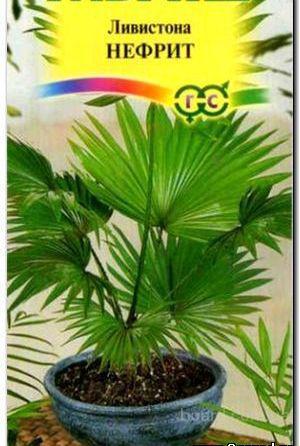 Насіння пальми лівиітона китайська «Нефрит»