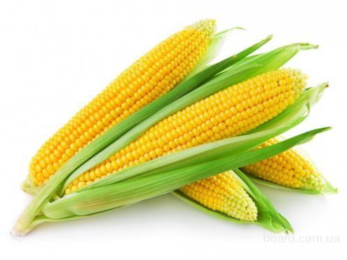 Купим кукурузу. Дорого!