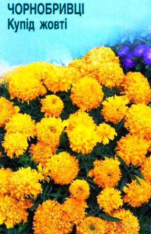 Насіння чорнобривців прямостоячих «Купід» жовті