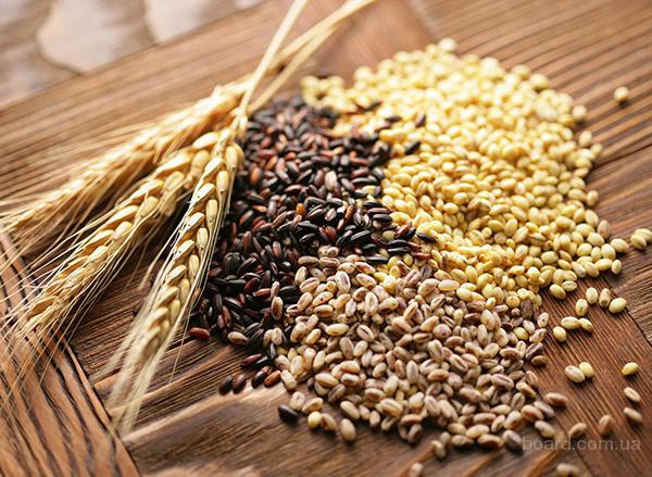 Дорого закупаем пшеницу, сою, кукурузу