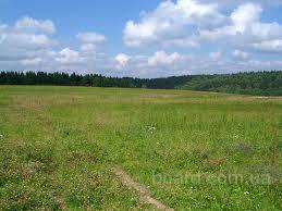 Куплю 50 га земли в Киевской области
