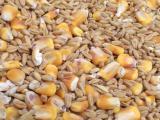 Куплю 10 тонн фуражного ячменя, пшеницы, зерноотходы кукурузы