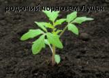 Купити родючий грунт (чорнозем); землю на засипку Луцьк з Доставкою по обл.