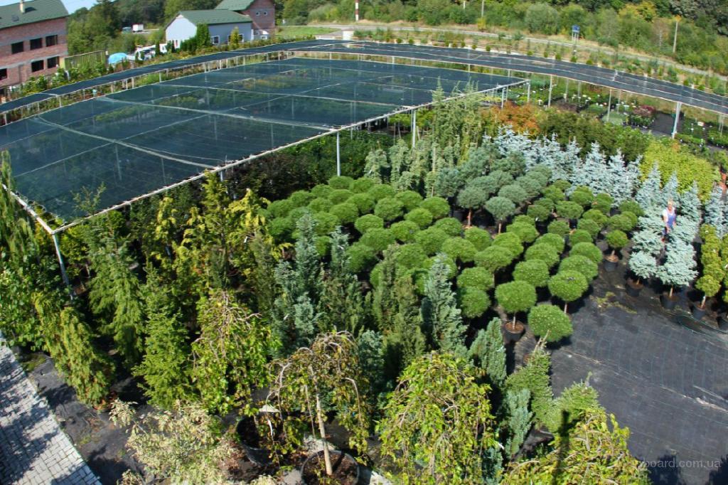 """Большой выбор растений - садовый центр """"Галсад"""""""