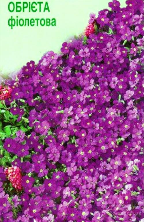 Насіння аубриетты культурної фіолетовою