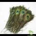 Перо павлина (25-30 см).Перья павлина