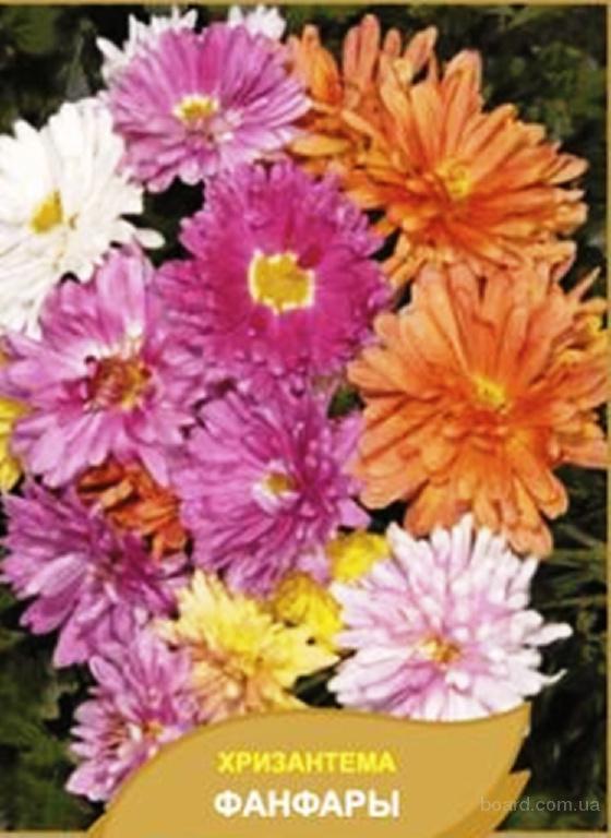 Насіння хризантеми індійської «Фанфари», суміш
