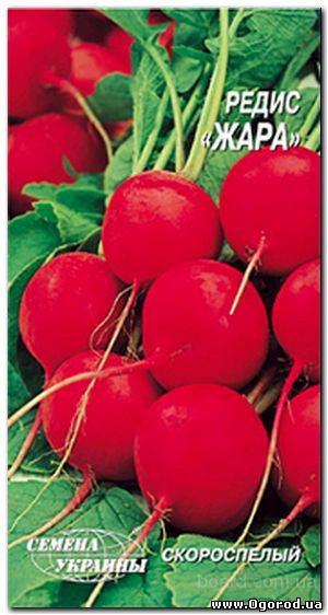 Семена редиса «Жара» - 3 грамма