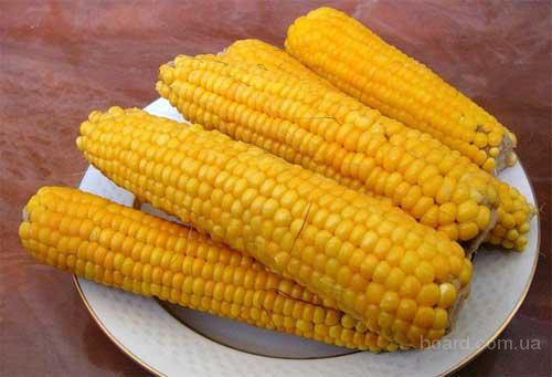 Сахарная кукуруза в початках, опт, урожай 2016