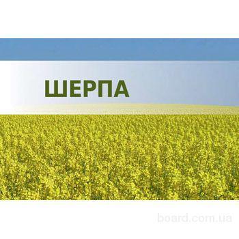 Семена озимого рапса Шерпа (Лембке)