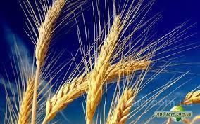 масличные и зерновые