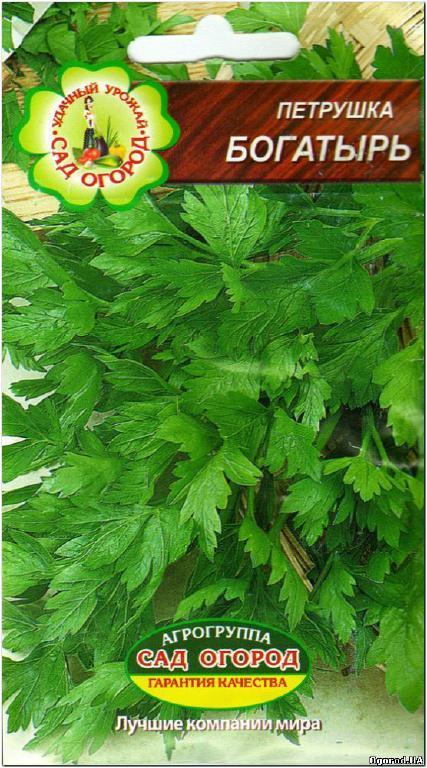 Семена петрушки «Богатырь» - 2 грамма