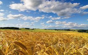 масличные, зерновые, бобовые культуры