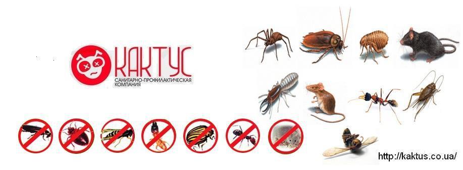 100% избавим от клопов, клещей, блох, комаров, тараканов, муравьев, ос, шершней и др.вредителей новейшим экометодом