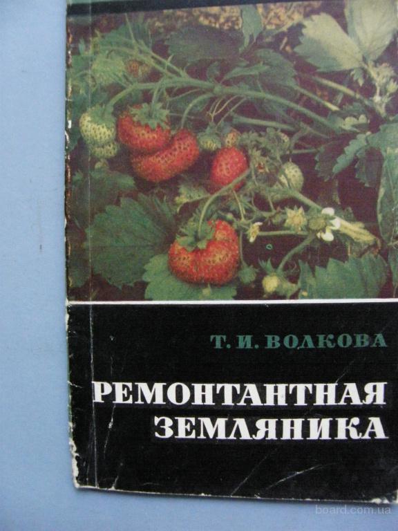 Ремонатанная земляника  Волкова Т.И.