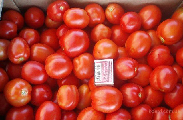 Продам помидор опт. Урожай 2016г. Цены от производителя