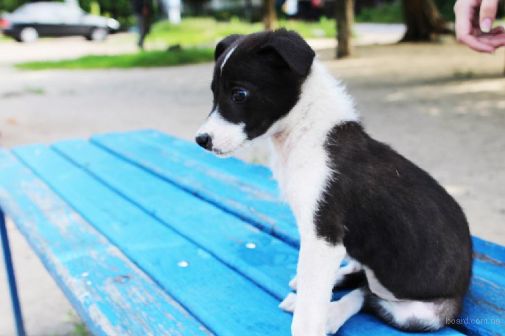 Подарите дом очаровательному щенку