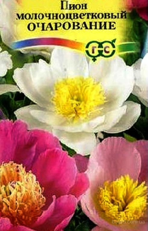 Насіння півонії молочкоцветкового «Чарівність»
