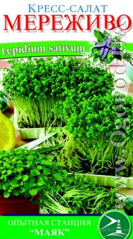 Семена салата «Мереживо» (кресс) - 1 грамм