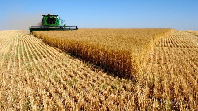 Срочно Купим дорого пшеницу, рапс и сою