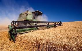 Закупаем Пшеницу, жмых, ячмень, рапс, сою, горох, кукурузу, подсолнух и это все Дорого