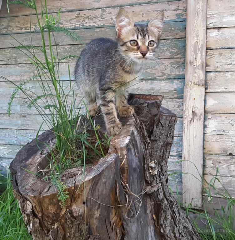 милые котята ищут дом!