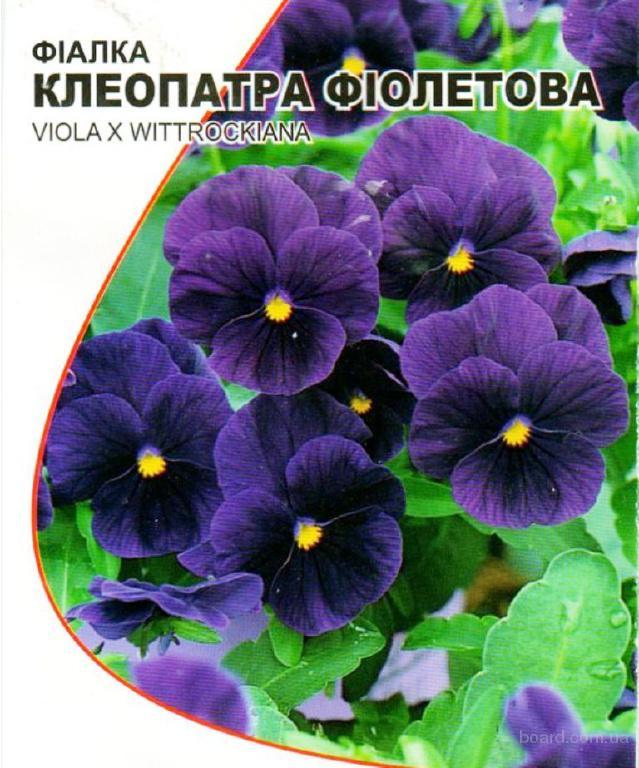 Насіння віоли фіолетової «Клеопатра»