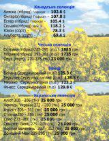 подсолнечник , кукуруза рапс Pioneer Syngenta Monsanto LG