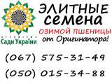 продам семена пшеницы, семена озимой пшеницы Кан, Лиль от АФ Сады Украины