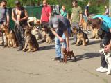 Школа дрессировки собак в Одессе