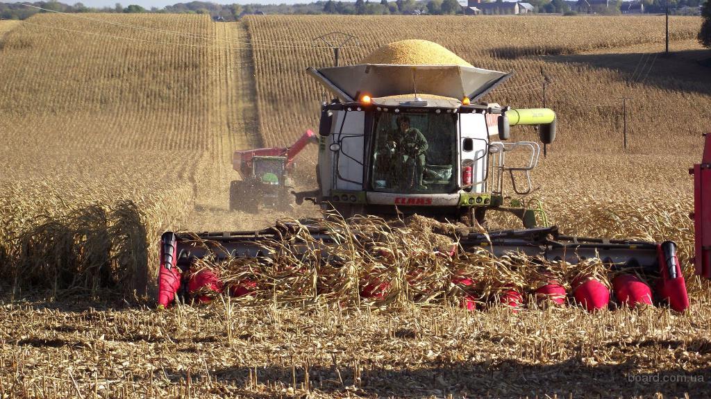 Оказываем качественные услуги по уборке урожая комбайнами Claas Lexion