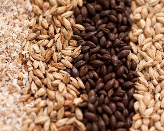 Купим пшеницу, кукурузу и др. зерновые.