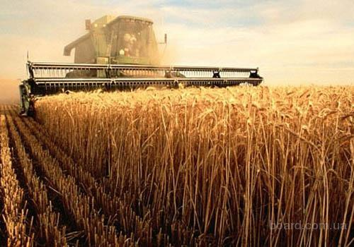 Закупаем  пшеницу урожая этого года