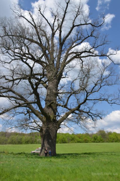 Удаление деревьев,обрезка деревьев,кронирование деревьев.
