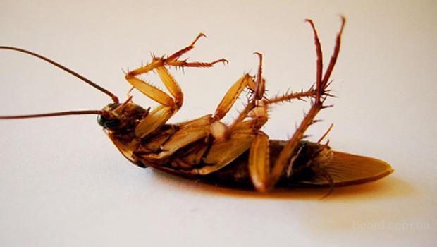 Уничтожение тараканов и других насекомых в Днепропетровске