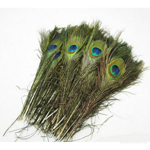 Перо павлина 25-30 см. Перья для декора