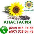 Продам семена подсолнечника, гибрид подсолнечника Анастасия, 110-115 дней (A-E), посевной материал от производителя