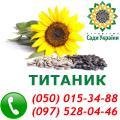 Продам семена подсолнечника, гибрид подсолнечника Титаник, 100-105 дней (A-E), посевной материал от производителя